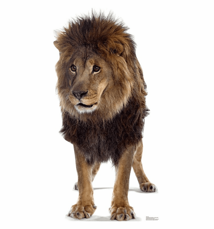 Lion Standee