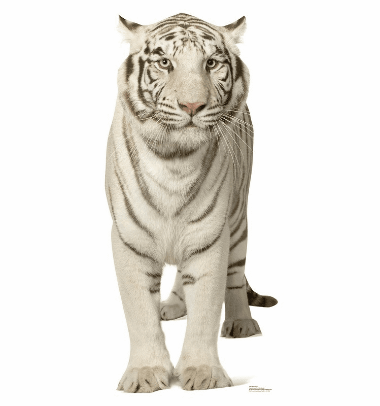 White Tiger Standee