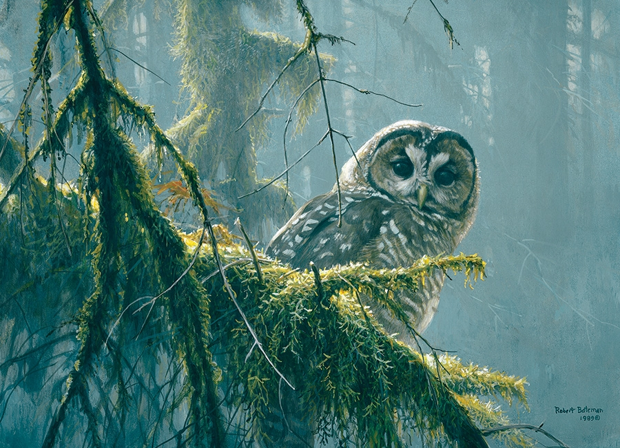 Cobble Hill Jigsaw Puzzle - 500pcs - Mossy Branches/Spotted Owl