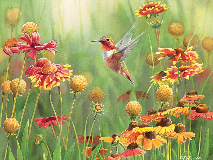 Cobble Hill Jigsaw Puzzle - 500pcs - Rufous Hummingbird
