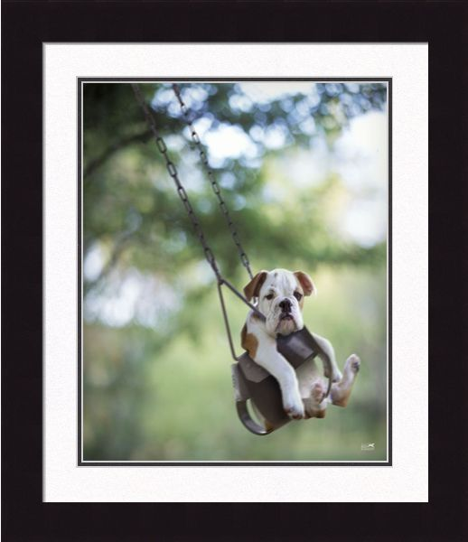 "Framed Picture - ""Buster"" - 20in x 24in - Artist Ron Schmidt"