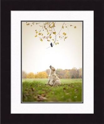 Framed Picture - Spot - 20  x 24 - Ron Schmidt