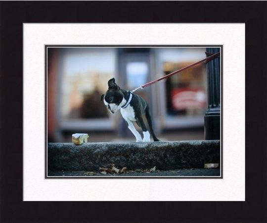 Framed Picture - Sugar - 16x20 - Ron Schmidt