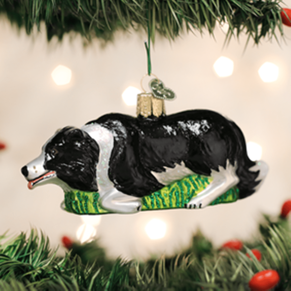 Old World Christmas Ornament - Herding Border Collie