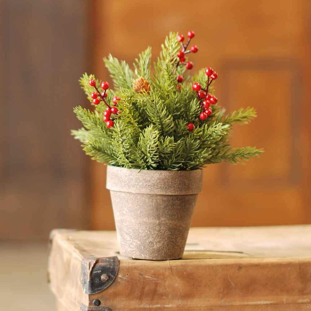 Potted Spruce Arrangement - White Spruce with Red Berries - 9.5 Inch