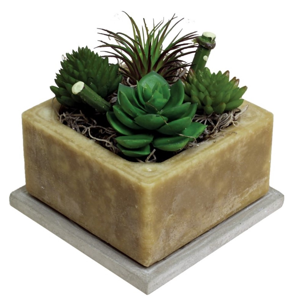 Wax Pottery Scented Geo - Habersham - Prickly Pear & Aloe - 4 Inch