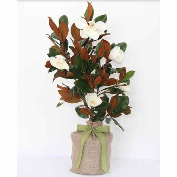 Memorial Tree for a Special Pet - Sympathy Gift For Dog, Cat, or Other Pet