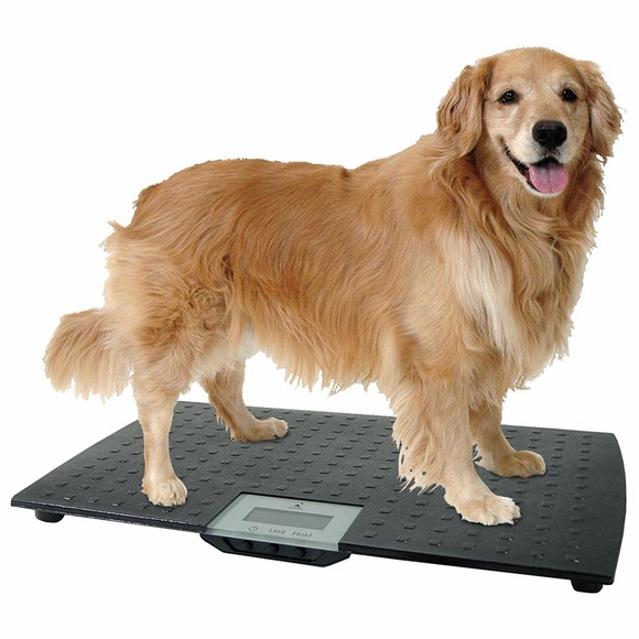 Precision Digital Pet Scale