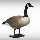 Realistic Canada Goose Garden Statue - Standing & Feeding Geese Set