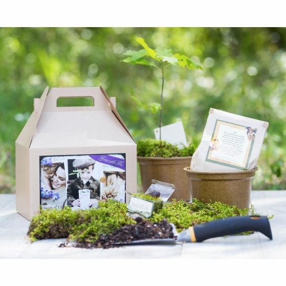 Sympathy Tree Seeds Of Life Kit - Includes Pot, Soil, Oak Seeds, and Grow Instructions