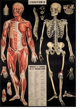 Decorative Art Prints L'Anatomie Poster