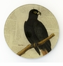 Black Parrot Round Decorative Glass Plate by Working Title