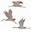 Crane Wall Plaques Set of 3 by SPI Home