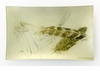Feathers Parivolia Italy Rectangular Decorative Glass Plate by Working Title