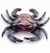SPI Home Crab Doorknocker
