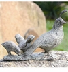 SPI Home Quail Family
