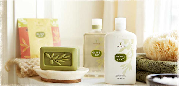 Thymes Olive Leaf Fragrance Collection