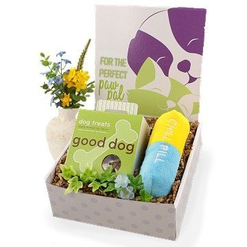 Dog Get Well Care Package