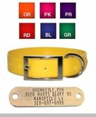 1 inch Sunglo Dog Collar with FREE Brass Name Plate