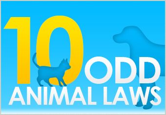 10 Animal Laws That You Won't Believe Are Real