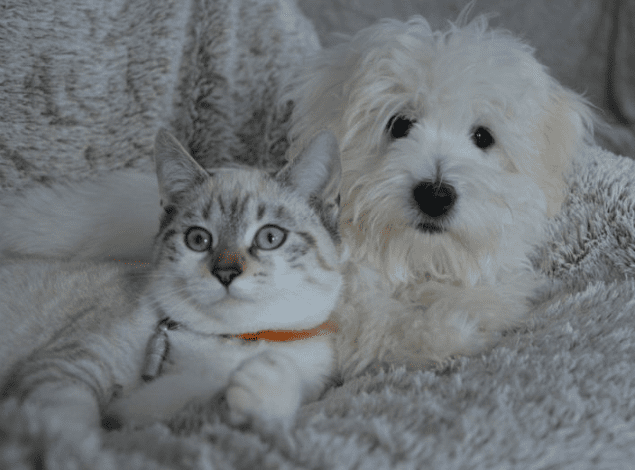 10 Best Dog Breeds for Cats