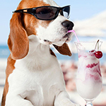 10 Summertime Activities For You And Your Dog