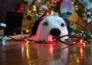 10 Ways Your Dog Can Ruin The Holidays - And How To Stop Them