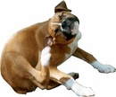 11 Reasons Why Your Pets Scratch Themselves