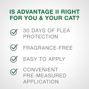 Is advantage 2 right for you and your cat? 30 days of flea protection