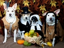 12 Thanksgiving Safety Tips for Pets
