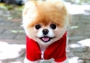 15 Adorably Fashionable Pets Who Pull Off The Color Red Better Than You
