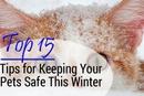 15 Helpful Tips for Keeping Your Pet Safe and Healthy This Winter