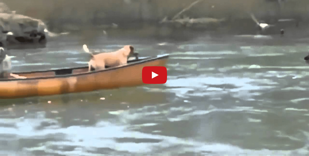 2 Dogs Saved from Imminent Peril- You'll Never Guess Who Comes to Their Rescue!