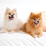 20 Tips For Living With Multiple Pets