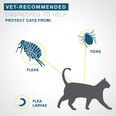 Cat silhouette with flea showing protection flow from collar