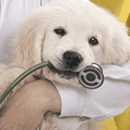 3 Things To Consider When Choosing A Veterinarian
