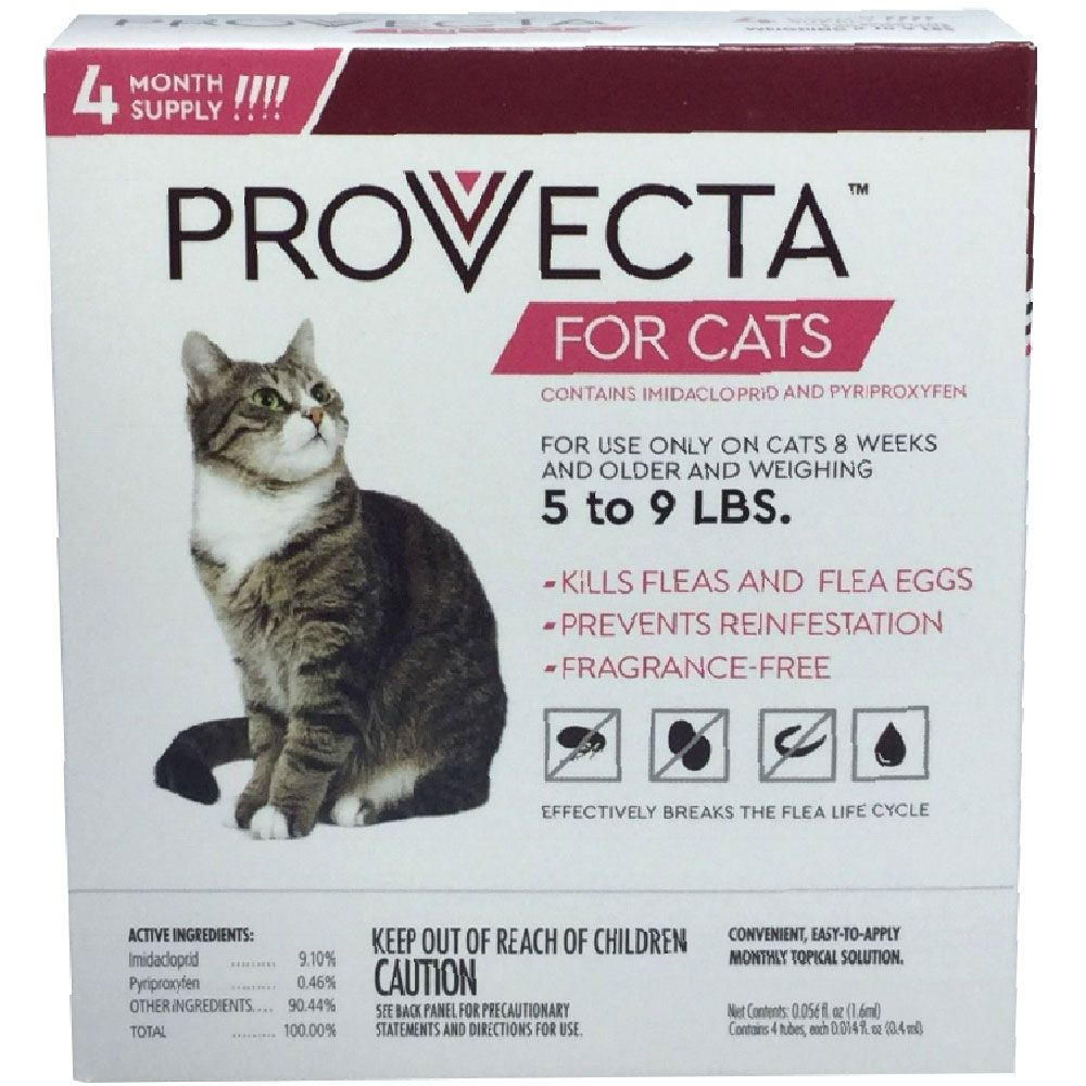 4-MONTH-PROVECTA-CATS