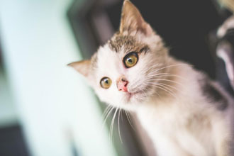 4 Ways Cats Are Good For Your Health