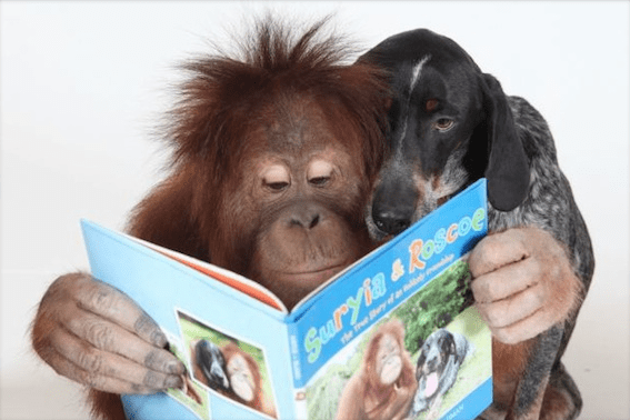 5 Animal Friendships That Will Leave You Smiling