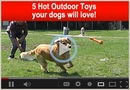 5 Hot Outdoor Toys your dogs will love!