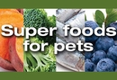 5 Superfoods Your Pets Will Love