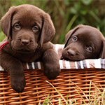 5 Tips For Housetraining Your Puppy