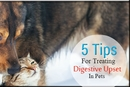 5 Tips for Treating Digestive Upset in Pets