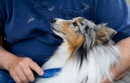 5 Ways To Reduce Pet Dander and Shedding