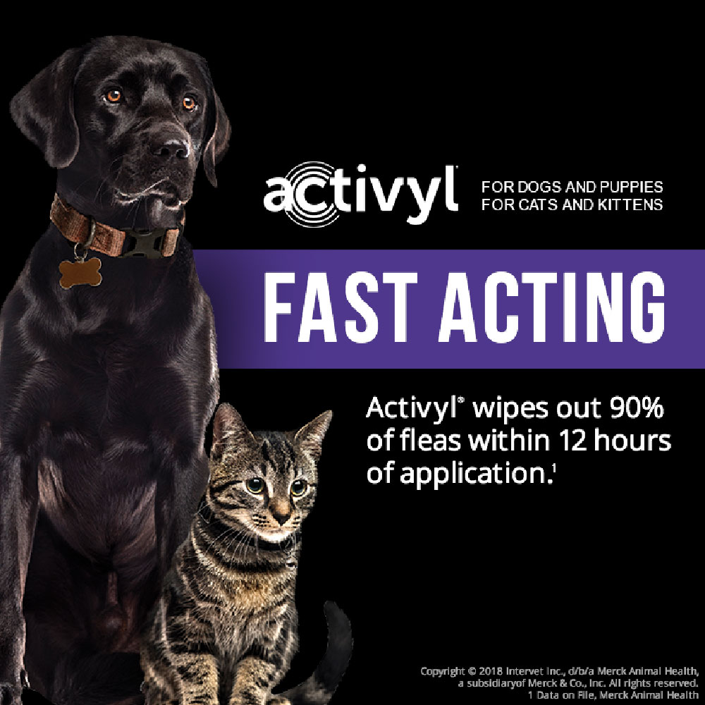 6-MONTH-ACTIVYL-SPOT-ON-CATS