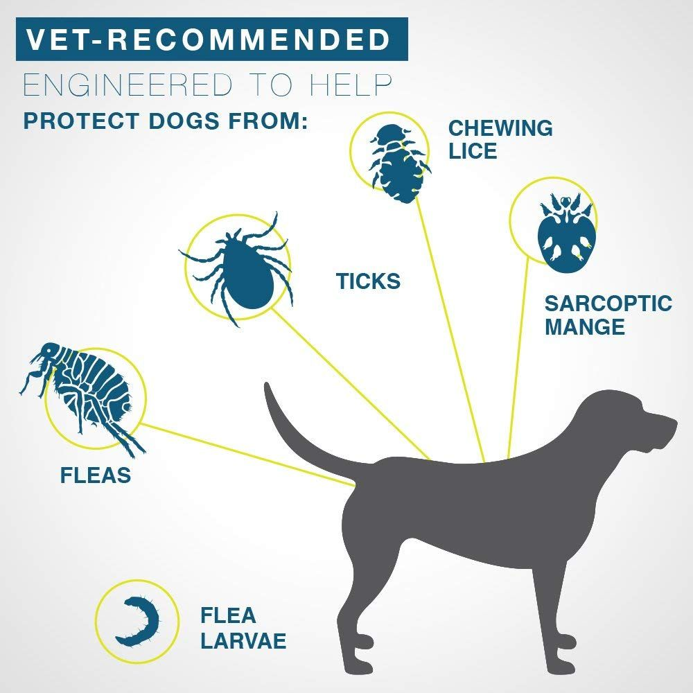 Dog silhouette connected to pictures of harmful insects