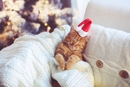 7 Tips for Protecting Your Cat this Holiday Season