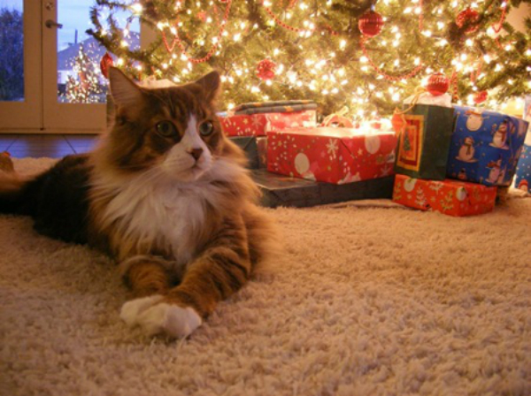 8 Holiday Pet Safety Tips