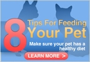 8 Tips for Feeding Your Pet