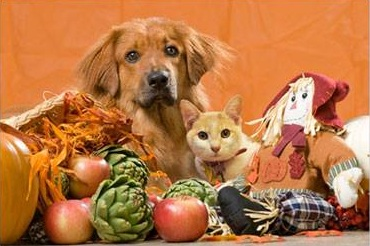9 Reasons to be Thankful for Your Pet This Thanksgiving